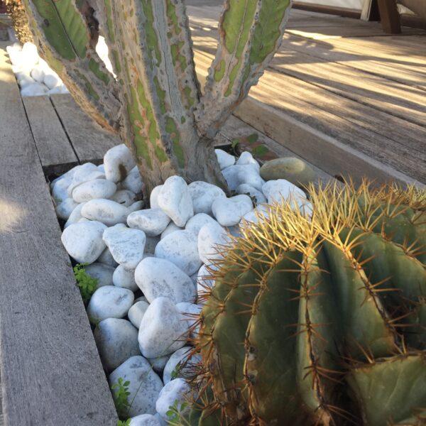 Tumlad carrarasten i planteringen