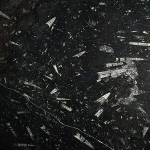 Fossil Black