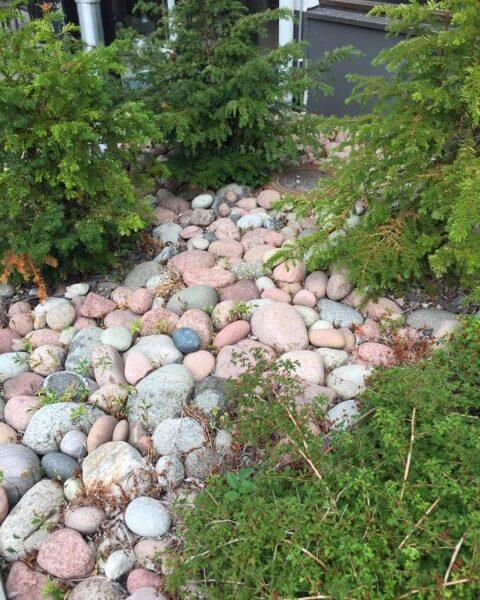 Kattskallar i Ålänsk granit